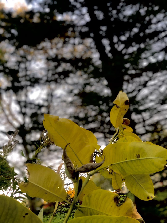 AALI_leaves_0917_1