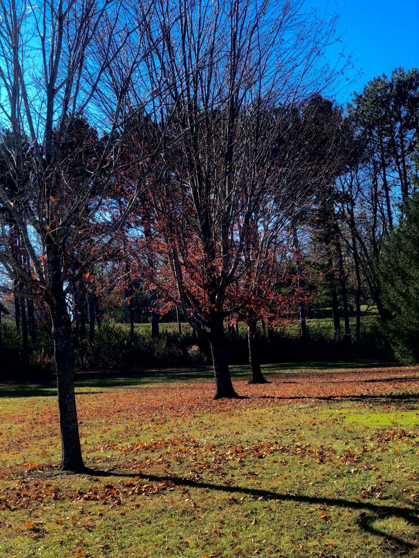 AALI_trees_0918_1