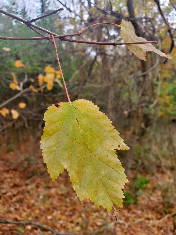 SaHA_Autumn_10_29_20_10