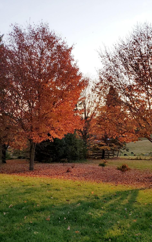 SaHA_Autumn_10_29_20_8