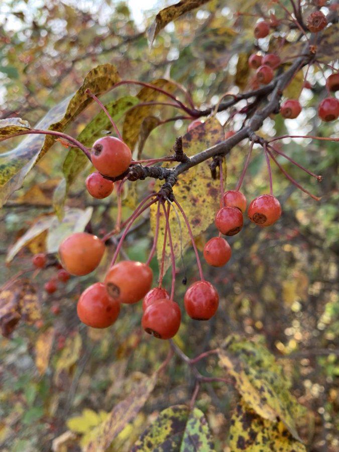 Autumnal close-up