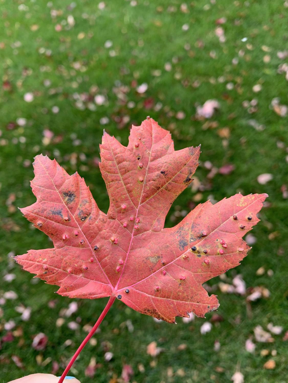 adma_autumnphotos_1019_4