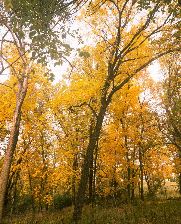 elpo_yellow_1021_9