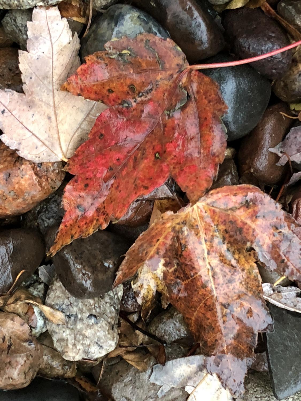 evsc_autumn_1022_2.jpg
