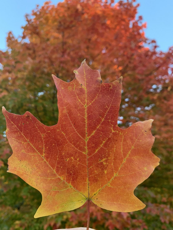 grac_autumn_1021_1
