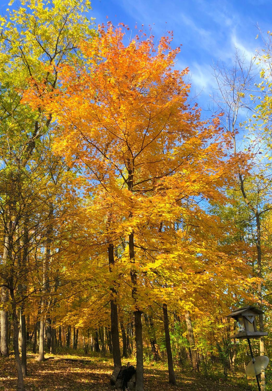 lubi_autumn_0910_2
