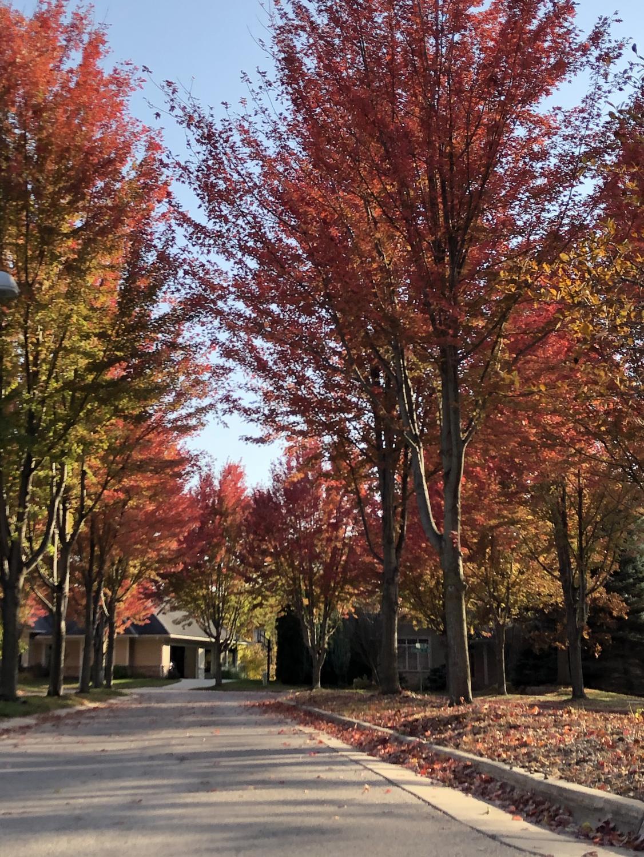 moso_autumn_1022_9