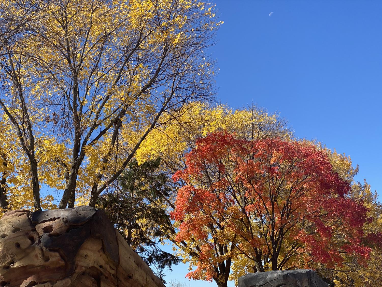 saad_autumn_2110_06